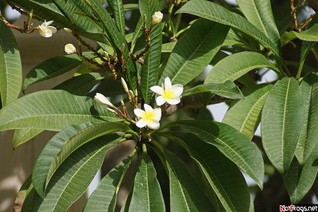 Одно из цветущих деревьев