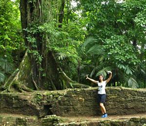 Фикусы вырастают очень крупными. Дерево Тулле, которому 2000 лет именно из этой породы.