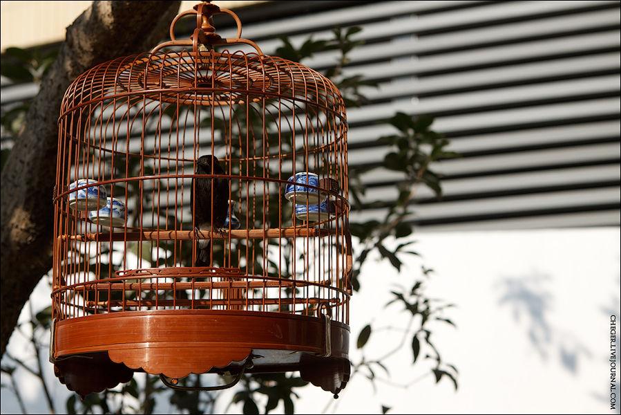 Птицы эти действительно восхитительно поют, но цены меня просто пугали. Самая низкая цена, которую я видел — около 2000 р
