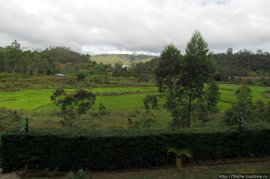 Прямо у отеля рисовое поле городка Ансирабе