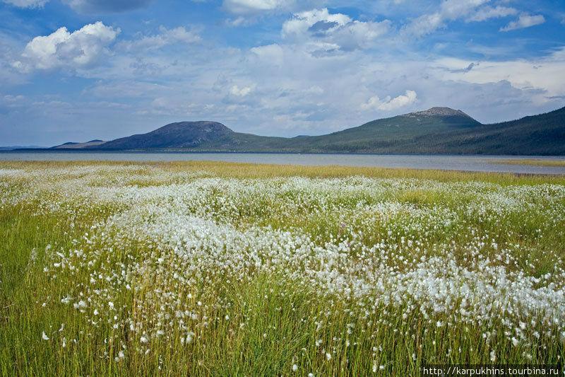 Озеро Лабынкыр. Южный берег. Середина августа.