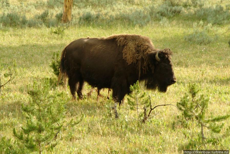 Первый день в необычной стране  Йеллоустоун Йеллоустоун Национальный Парк, CША