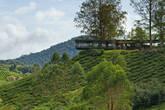 Чайные плантации Boh Sungei Palas, Камерон Хайлендс