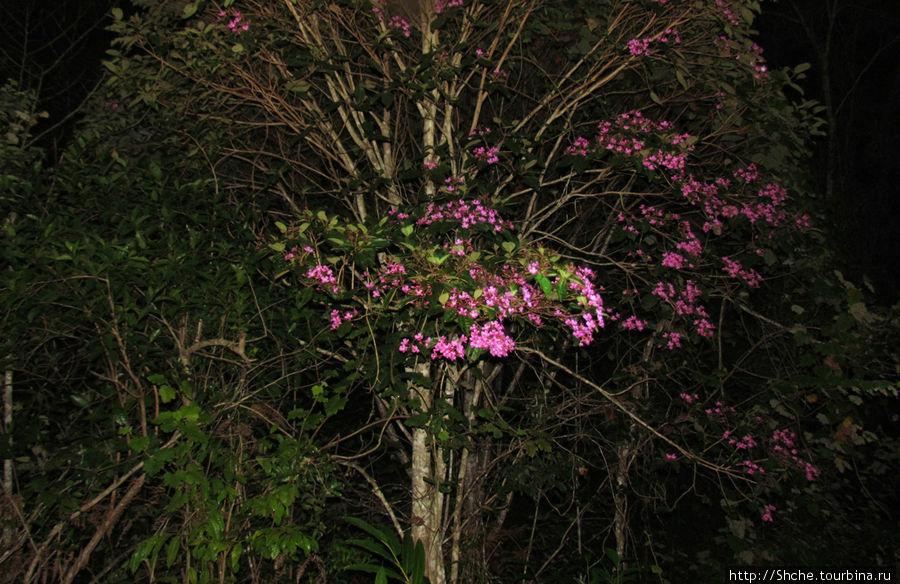 Хорошо, что цветы с деревьев не разбегаются на ночь...