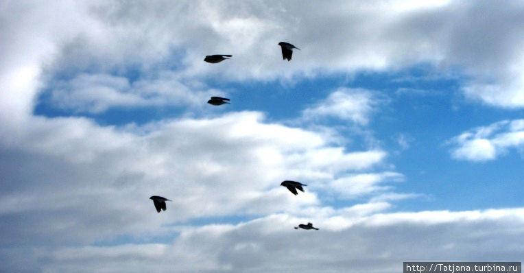 полет птиц -это медитация ветра