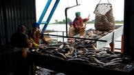 Рыбозавод – сюда на баржах доставляется улов от рыбацких бригад, разбросанных по разным уголкам дельты