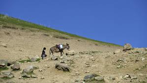 В обязанность  маленькой девочки входит снабжение хозяйства питьевой водой. Несколько раз в день она отправляется со своим осликом к роднику, находящемуся в ущелье, в километре от дома. Наполнить ведерком две сорокалитровые фляги закрепленные на седле, они по крутой горной тропинке идут к дому. Кордайский район.