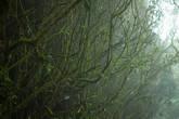 Мшистый лес по пути к вершине горы Беринчанг, Камерон Хайлендс
