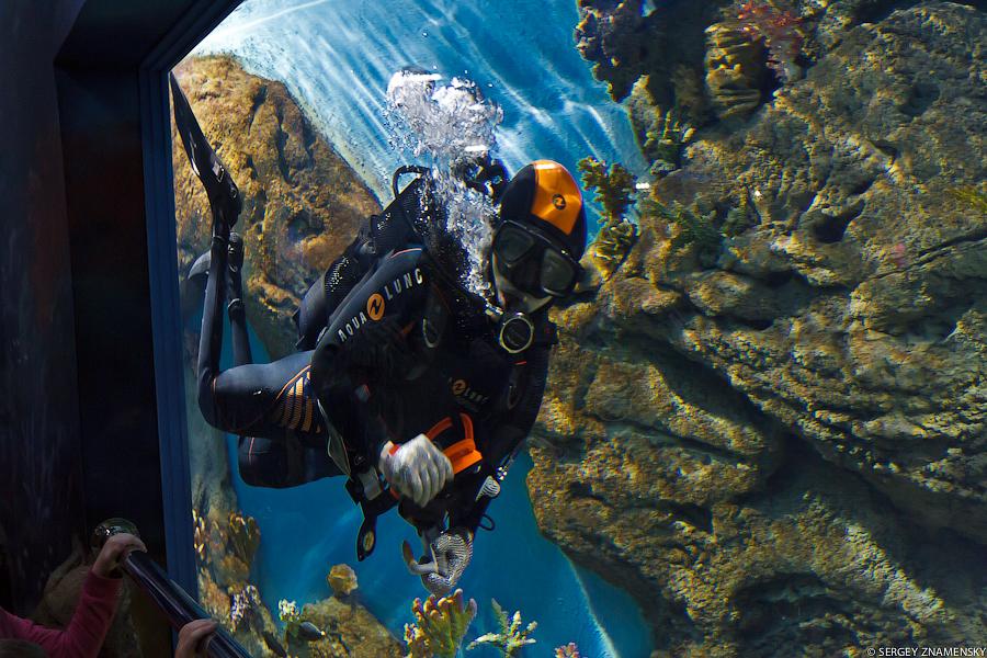 Внутри аквариумов плавают аквалангисты и чистят их изнутри. Они любят махать зрителям, вызывая восторг всех детей: