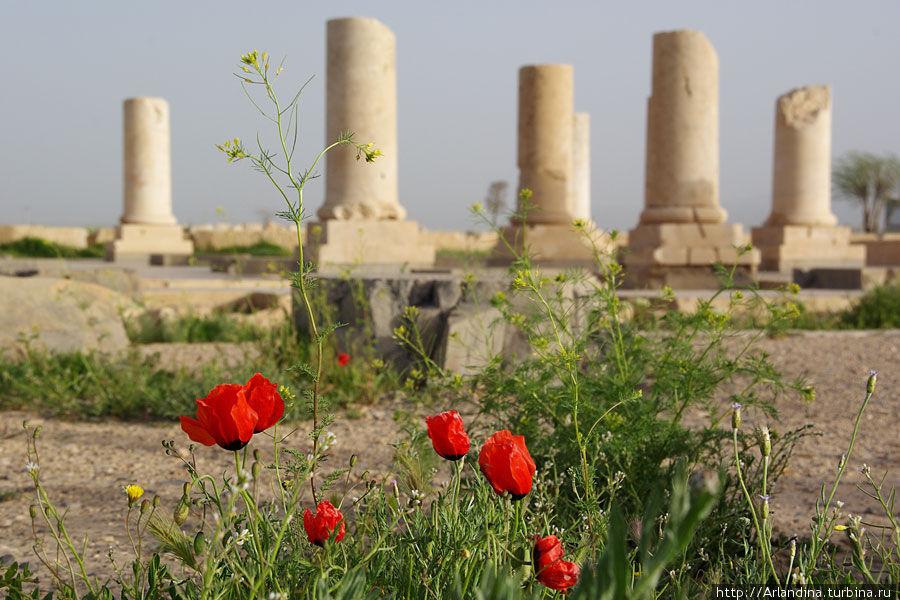 Пасаргады,  первая столица Персидской империи Иран