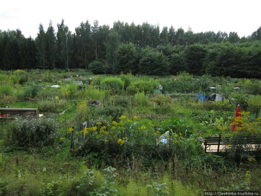 Маленькие огородные участки в лесу