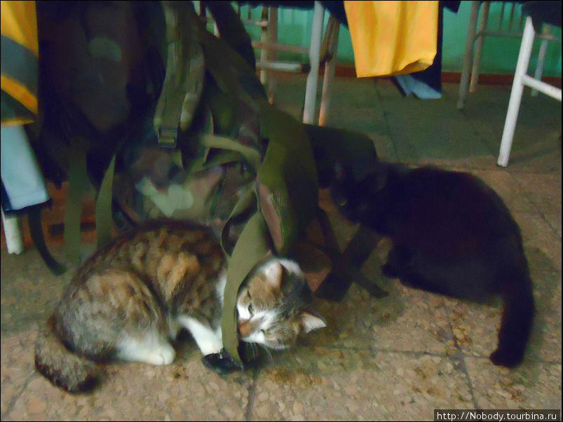 Кошки получились плохо — они слишком быстрые, а фотоаппарат слишком медленный((
