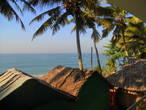 Пальмы над соломенными крышами