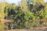 На озеро приходят пить зверушки, но в этот раз там были только птицы
