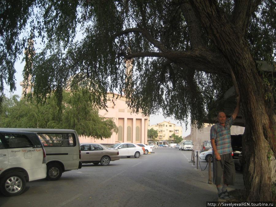 Крона этого дерева накрыла пол улицы.