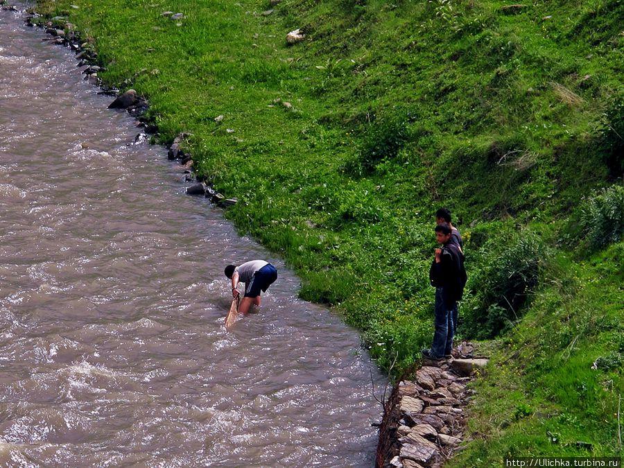 на что ловят форель в горных речках
