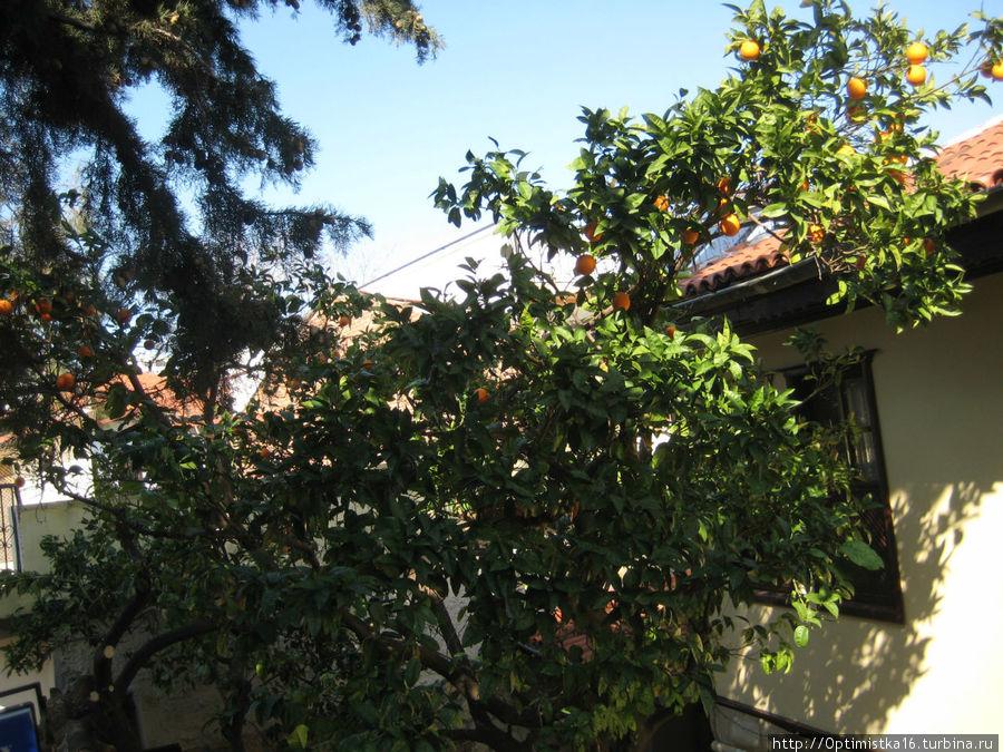 Вид из окна нашей комнаты на апельсины