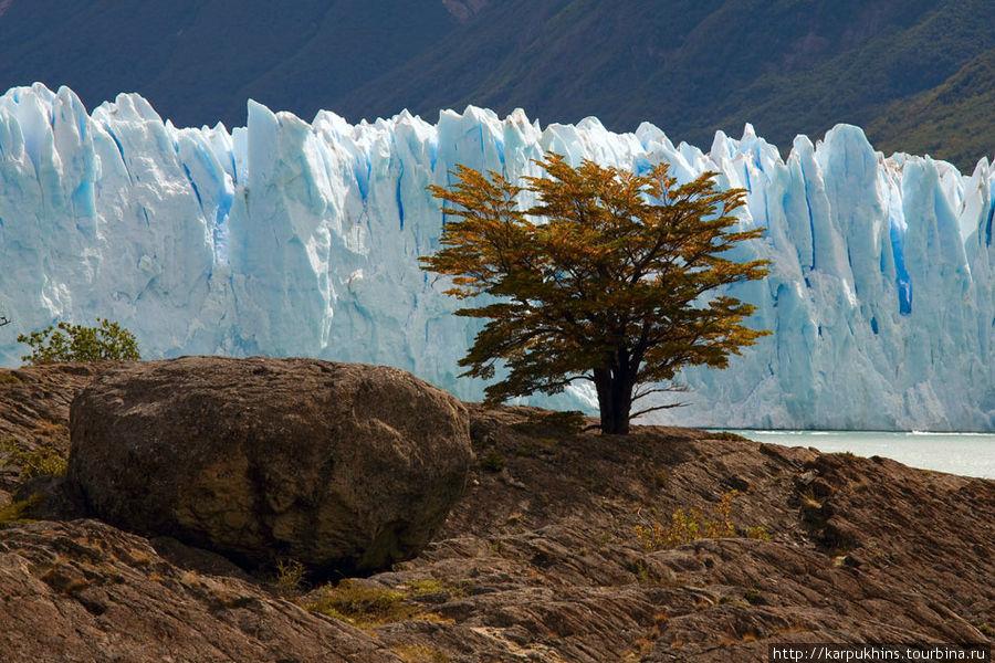 Это отдельно стоящее дерево так и просится в кадр на фоне ледника. Думаю, большинство это замечают и используют. Но снимать лучше с некоторого расстояния на длинном фокусе. Здесь у меня что-то ближе к 200мм.
