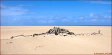 Берег Индийского океана
