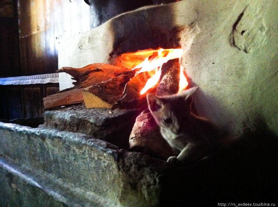 А это нам готовят котёнка, это национальное блюдо у Шерпов... Шутка конечно) Он просто очень бесстрашный и лезет греться прямо в огонь, у него даже все усы подпалены.
