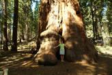 Хороший контраст размеров человека и дерева. А ввысь все равно не снять, как не старайся.