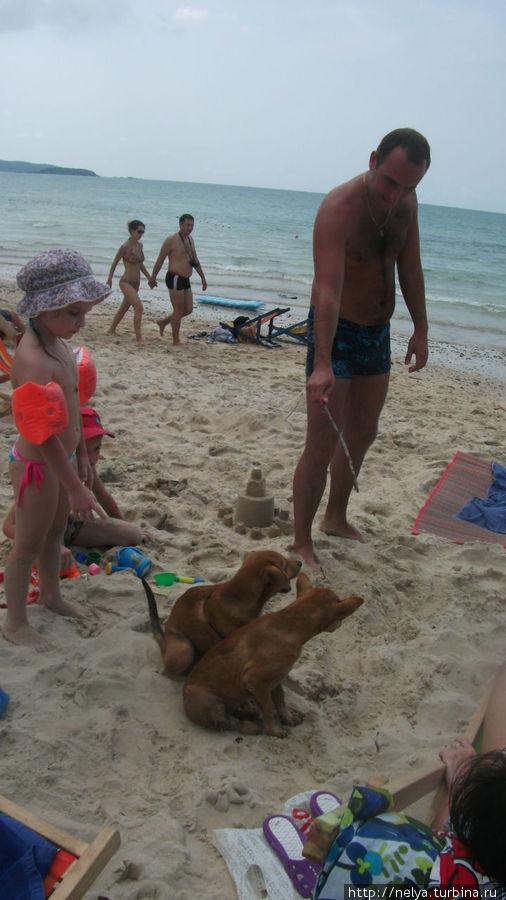 Тоже обитатели военного пляжа...очень смешно гоняют обезьян.