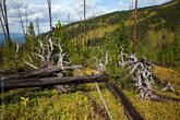 В каком-то страшном порыве кто-то очень большой разбросал огромные деревья. Какой же силой обладал этот кто-то...