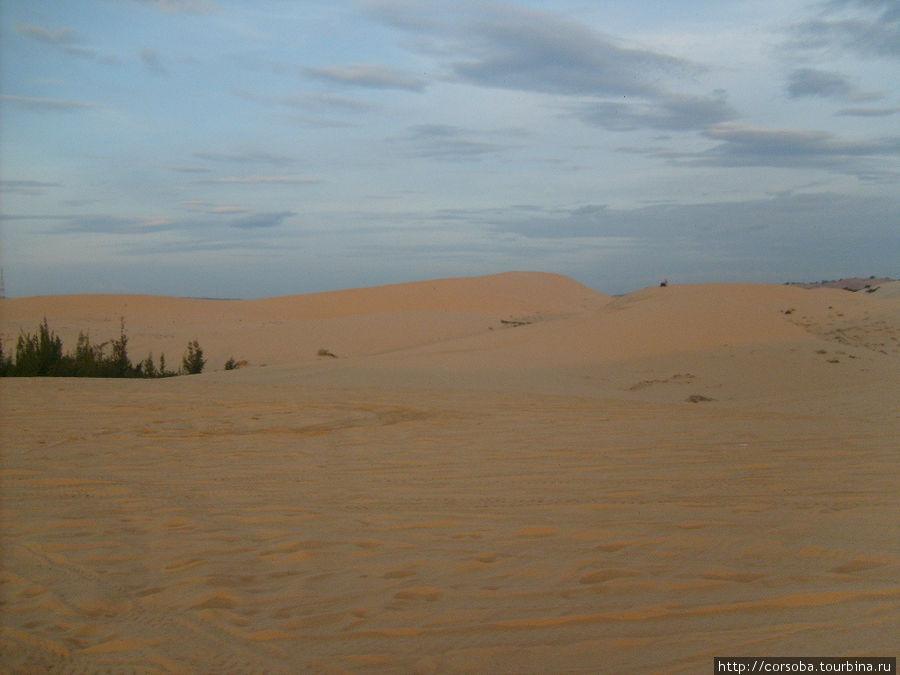 И дюны зазолотились и порозовели.