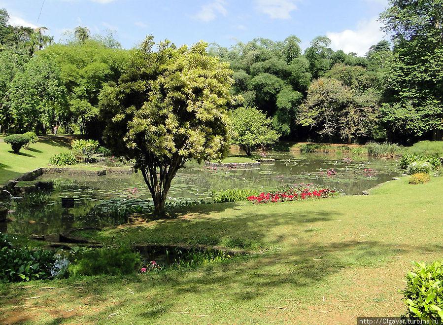 Королевский Ботанический сад — чем не Эдем Перадения, Шри-Ланка