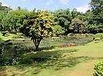 Королевский Ботанический сад — чем не Эдем