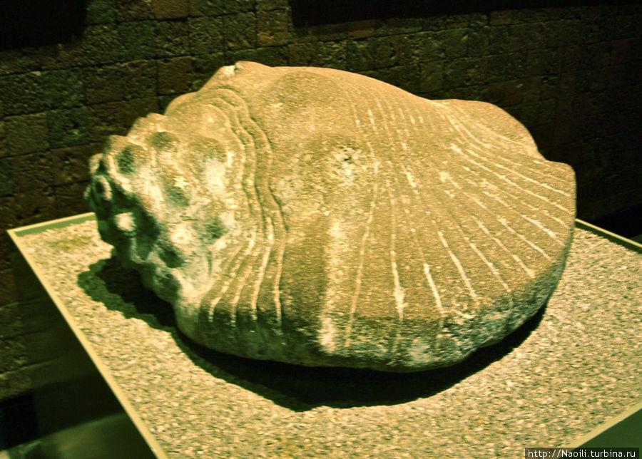 Раковина из Темпло Майор, это морское животное символизировало водную часть вселенной. Тлалокан был создан с их помощью