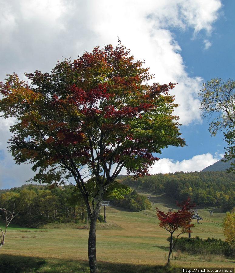 Большинство деревьев только начинают раскрашиваться
