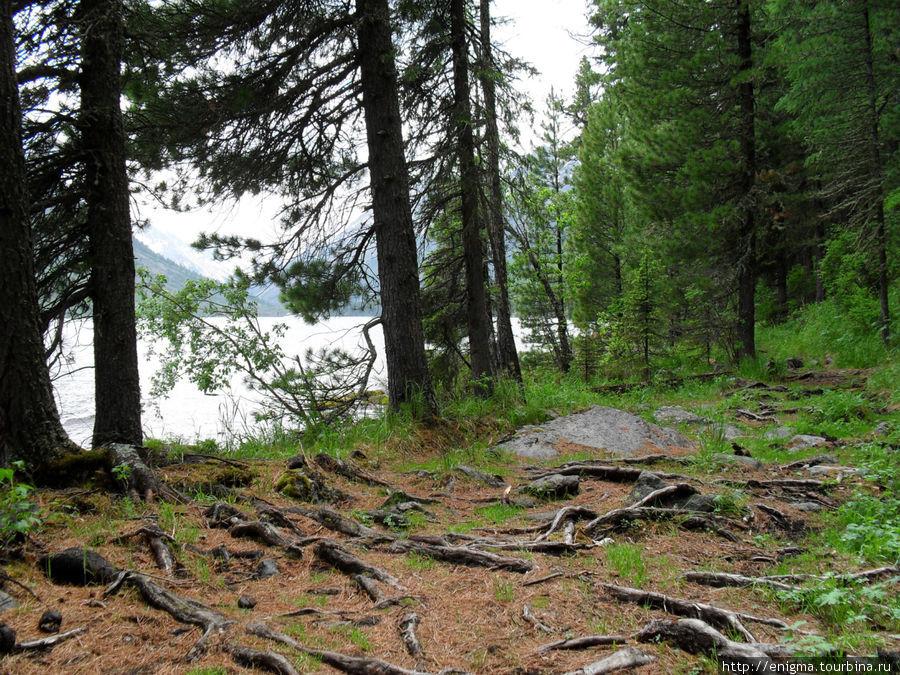 Лесная тропа вокруг 1-го озера.