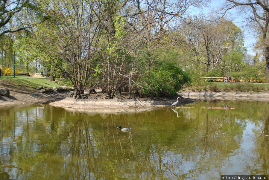 Непуганные утки и цапли в Schweizergarten — парке недалеко от Восточного вокзала, верхнего Бельведера и военно-исторического музея.