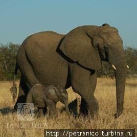 Cлоны на прогулке