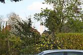 Колокольня с типичной баварской барочной луковкой видна сквозь цветущие деревья