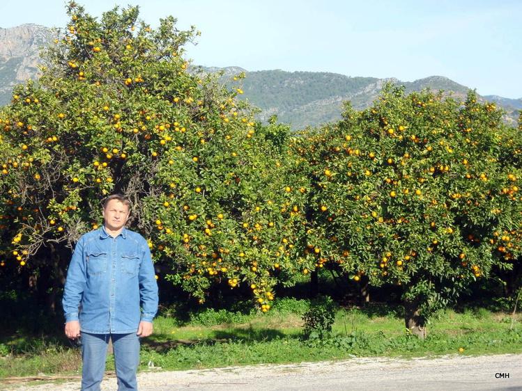 Апельсинчики, лимончики