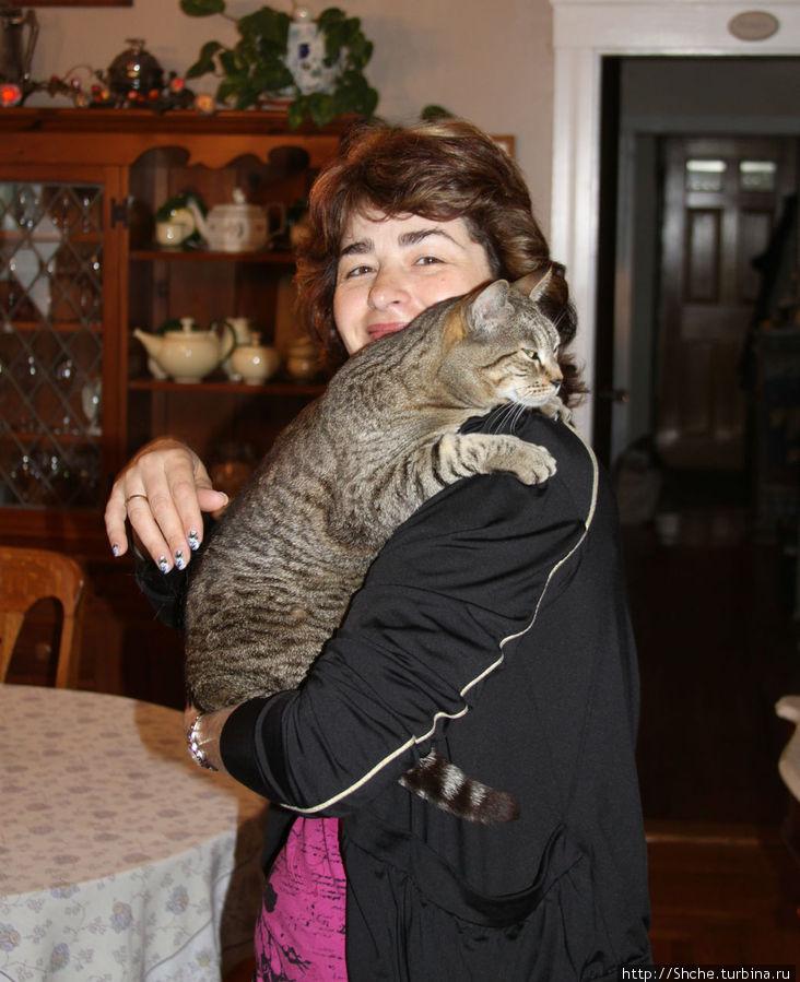 Кошка Клеопатра — нежное отзывчивое существо