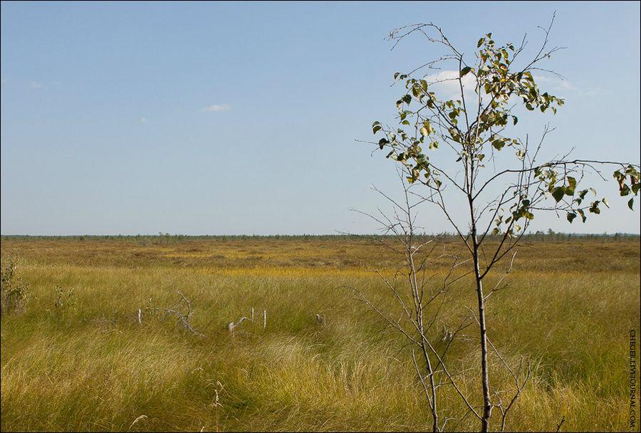 великое болото фото вологодская область обычные бумажные