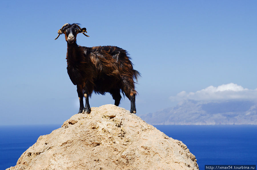 картинки греция козы хиккадува место, где